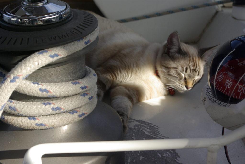 Manouche, capitaine du Poulpe, faisant la siesta sur Lucy